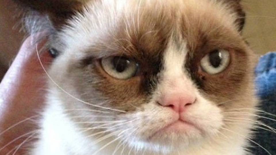 Grumpy Cat picture image