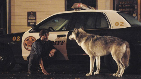 Jamie Dornan as Graham with the Wolf, ABC's Once Upon a Time, The Heart is a Lonely Hunter picture image